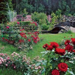 Деревенский розарий
